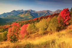 Timpanogos with red maples. Royalty Free Stock Images