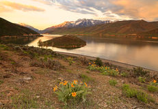 Timpanogos sunrise landscape with wildflowers. Stock Photo