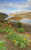 Timpanogos sunrise landscape with wildflowers. Stock Images