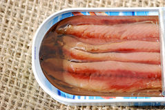 Tin of anchovy fillets Stock Photography