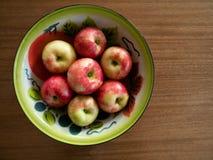 Tin Bowl pintado com maçãs de Honeycrisp fotografia de stock royalty free