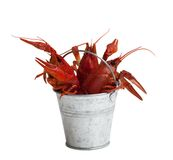 Tin bucket of boiled crawfish Royalty Free Stock Images