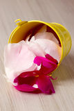 Tin bucket filled with rose petals Royalty Free Stock Photography
