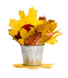 Tin bucket full of leaves isolated Stock Images