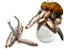 Tin can with anchovies Stock Image