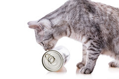 Tin cat. Isolated on white background Royalty Free Stock Image