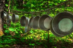 Tin Cups hang on Line in Woods Stock Images