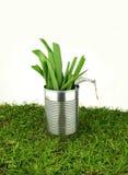 Tin with fresh onion Royalty Free Stock Image