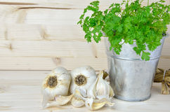 Tin with fresh parsley and garlic cloves Royalty Free Stock Image