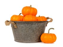 Tin harvest pail with autumn pumpkins over white Royalty Free Stock Images