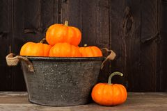 Tin harvest pail with autumn pumpkins over wood Royalty Free Stock Photos
