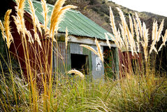 Tin Hut. Small tin hut with open door and grasses nearly as tall as it stock photography