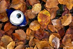 Tin among the leaves Stock Photography