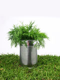 Tin with parsley Royalty Free Stock Image
