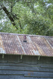 Tin Roof. Vintage tin roof on a retro wooden building Stock Image