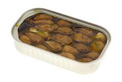 Tin of whole smoked oysters in cottonseed oil Royalty Free Stock Photo