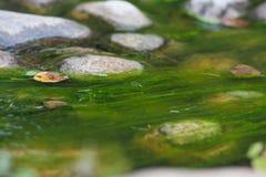 Tina na água água e pedras no foto de stock