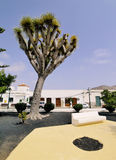 Tinajo, Lanzarote, Canary Islands, Spain Stock Photo