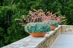 Tinas decorativas de la flor imágenes de archivo libres de regalías