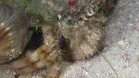 Tinctor n del dardanus del cangrejo de ermitaño la noche en el Mar Rojo almacen de metraje de vídeo