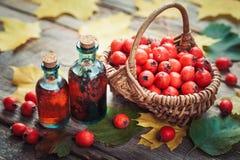 Tincture μπουκάλια των μούρων κραταίγου, ώριμα μήλα αγκαθιών Στοκ εικόνα με δικαίωμα ελεύθερης χρήσης