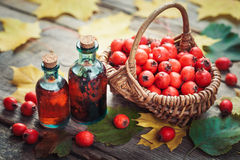 Tincture bottles of hawthorn berries, ripe thorn apples Royalty Free Stock Image