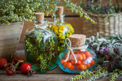Tincture bottles of tansy, tarragon and rowanberries Royalty Free Stock Photography