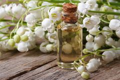 Tincture of flowers fragrant lilies of the valley. macro Royalty Free Stock Photo