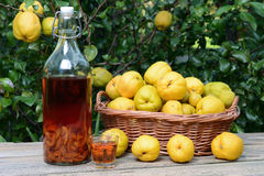 Tincture of quince and fruit in wicker basket. Royalty Free Stock Photos