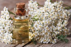 Tincture of yarrow in the bottle close-up horizontal Stock Photography