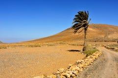 Tindaya berg i La Oliva, Fuerteventura, kanariefågelöar, Spa Arkivfoton