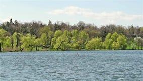 Tineretului Public Park View In Bucharest stock video footage
