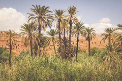 Tinerhir village near Georges Todra at Morocco Royalty Free Stock Photography