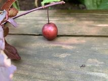 The tiniest snail I`ve ever seen! royalty free stock image