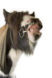 tinker лошади Стоковое Фото
