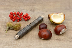 Tinker with autumn fruits Stock Photos