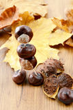 Tinker little chestnut figures auf nuts and leaves.  Stock Image