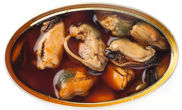 Tinned mussels in a brown oily  sauce. Royalty Free Stock Image