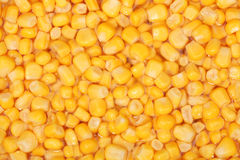 Tinned whole kernel corn background Royalty Free Stock Photography