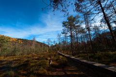 Tinovul Mohos reservation and forest. Royalty Free Stock Images