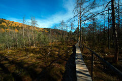 Tinovul Mohos reservation and forest. Royalty Free Stock Photo