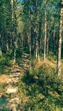 Tinovul Mohos reservation i Rumänien Arkivbild