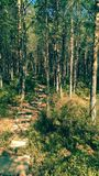 Tinovul Mohos reservation in Romania Stock Photography