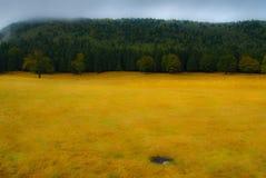 Tinovul Mohos skog Royaltyfri Foto