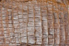Tint Golden Crocodile Skin Texture, closeup Stock Images