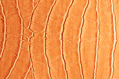 Tint Orange Crocodile Skin Texture Stock Image