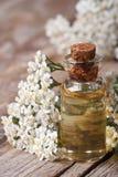 Tint van duizendbladclose-up op een achtergrond van bloemen royalty-vrije stock foto