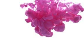 A tinta cor-de-rosa deixou cair na água no fundo branco vídeos de arquivo