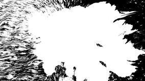 Tinta de la floración La tinta blanca hermosa de la acuarela cae la transición en fondo negro, metrajes