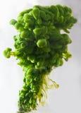 Tinta verde Foto de Stock